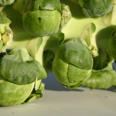 It is Brussels Sprouts on the Stalk Season!