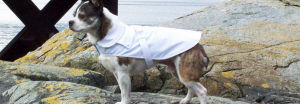 Buy an Irish Dog Coat for your dog