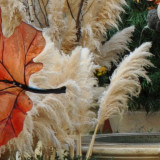 Halloween – Decorating Outside
