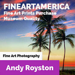 Andy Royston at Fine Art America