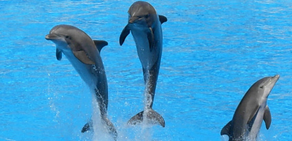 Gifts for Animal Lovers: Dolphins