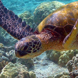 Gifts for Animal Lovers: Turtles
