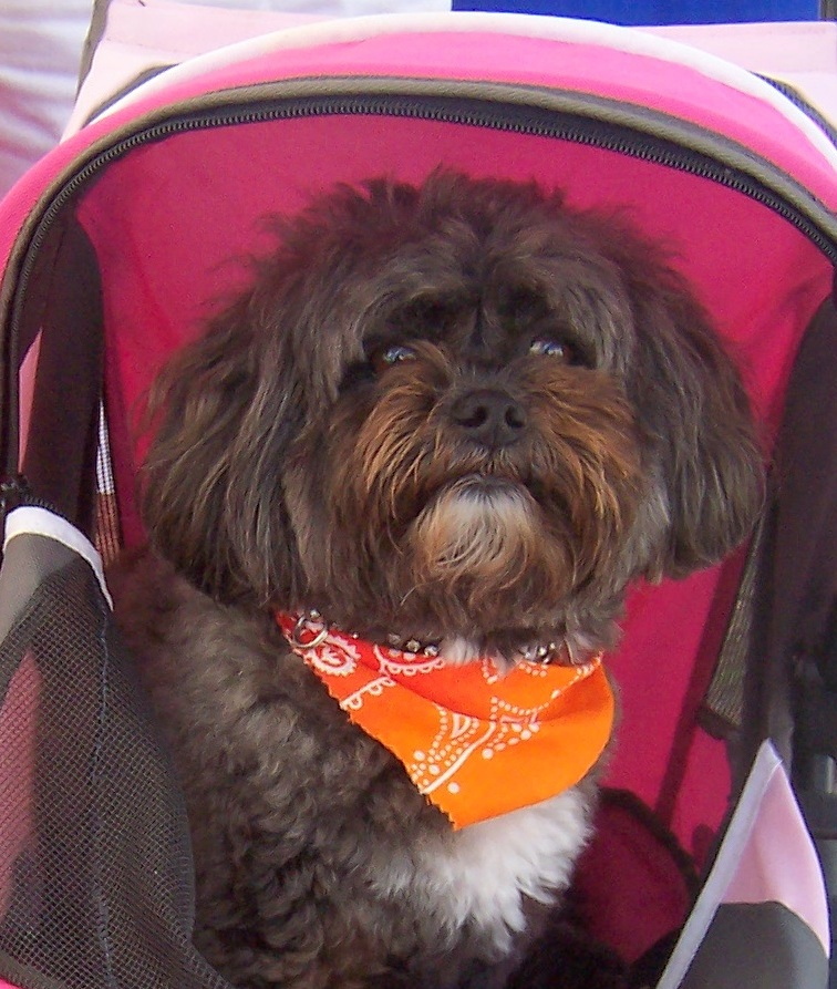 GIGI closeup in her carriage