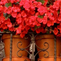Small Spaces:  Gardening Small for Big Results