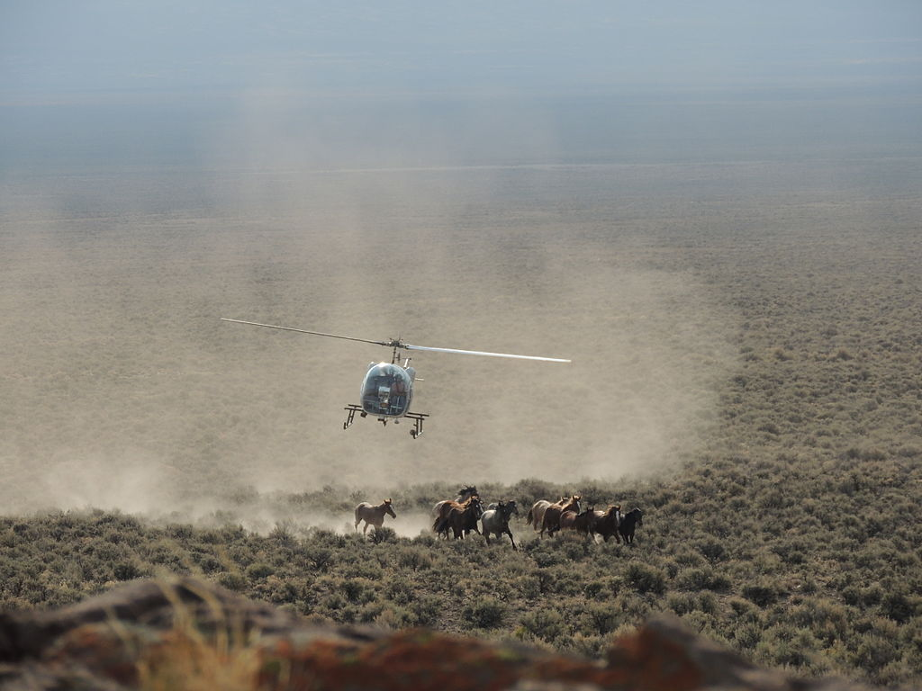 Desatoya Mountain Range, Nevada Wild Horse Gather by Helicopter