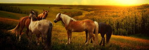 Petition Against A Horse Kill Buyer