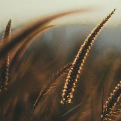 Wheat Allergies: Food preparation and flours that work around it