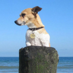 Fort Lauderdale: Dog Friendly Vacation Rental