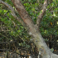 Mangrove Lightning, by Randy Wayne White